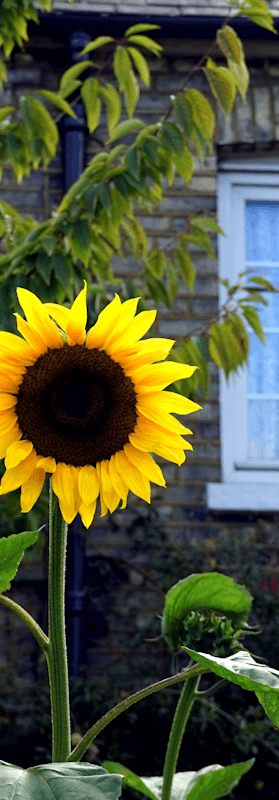 Five Ways To Make Potential Buyers Gawk At Your Curb Appeal (video)