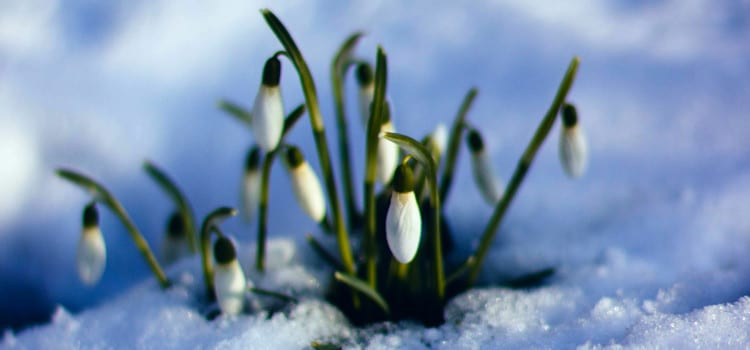 Five Reasons Why Spring Is The Perfect Time To Sell